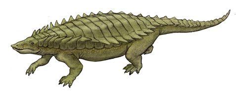 The Long crocodile, Longosuchus (1990) Phylum : Chordata Class : Reptilia Order : Aetosauria Family : Stagonolepididae Subfamily : Desmatosuchinae Genus : Longosuchus Species : L. meadei • Late Triassic • 3 m long (size) • North America (map) The...