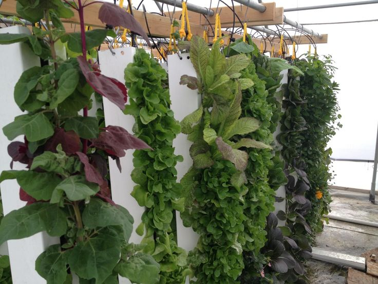 Vertical Garden Ideas Diy 308 best vertical garden ideas images on pinterest | vertical