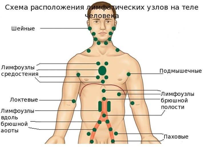 Лимфатическая система. Лимфаденит