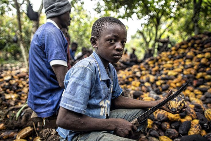 A young boy uses a machete to break cocoa pods at a farm near Abengourou in…