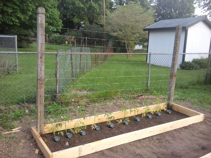 Heirloom tomato trellis in a 3x30 raised bed