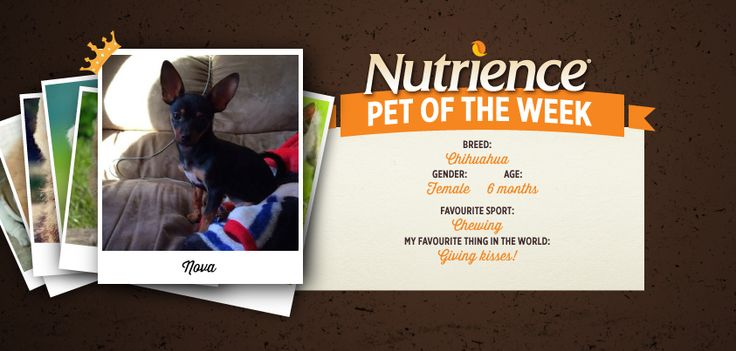 Nova is one sweet #pup who loves chewing and giving the best #kisses! Submit yours #dog or #cat for Pet Of The Week here: http://bit.ly/PetOfWeek