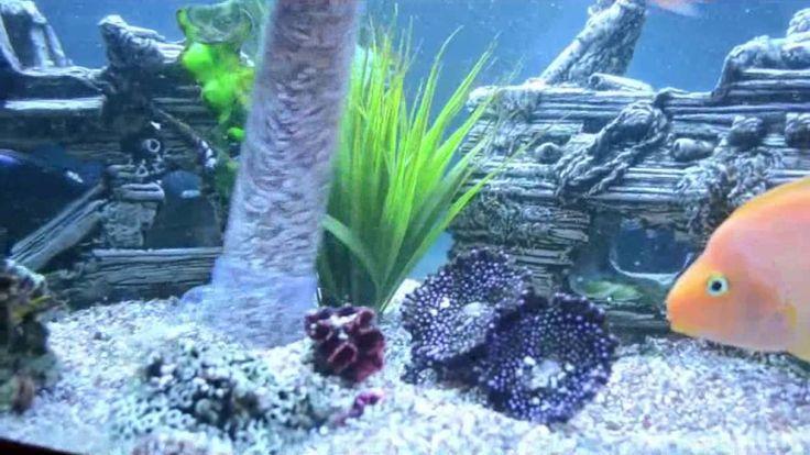 Maintaining Fish Tank https://www.youtube.com/watch?v=nCw6GjtMybc #RentAquarium, #RentanAquarium, #AquariumLondon, #LondonAquarium, #London