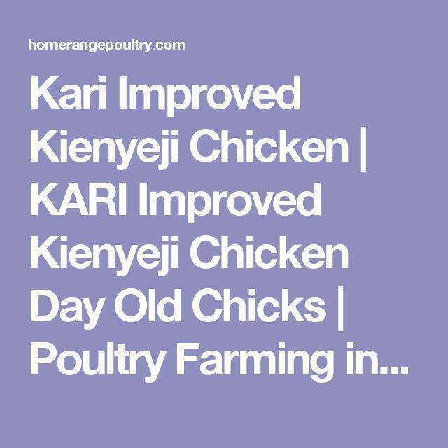 Kari Improved Kienyeji Chicken | KARI Improved Kienyeji Chicken Day Old Chicks | Poultry Farming in Kenya | Poultry Farming Training in Kenya | Home of the KARI improved kienyeji chicken | ..::Homerange Poultry Kenya::.. | Training on Poultry Farming | Poultry Farming Training in Kenya | KARI Impoved Kienyeji Chicken Training | Training on Kienyeji Chicken Farming | Poultry Farming Training in Kenya | Kari Improved Kienyeji Chicken Farming Training | Kienyeji Chicken Farming in Kenya |