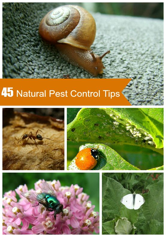 45 Tips For Natural Garden Pest Control<--snails, house flies, ants, aphids and more