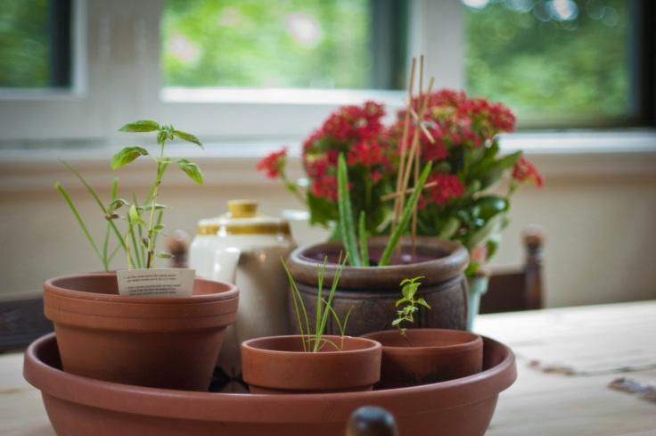 Fines herbes & Kalanchoe