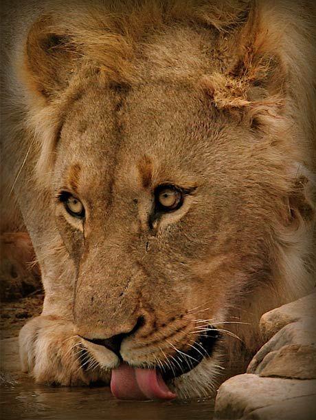 Big 5 Safaris - www.lederlesafaris.com