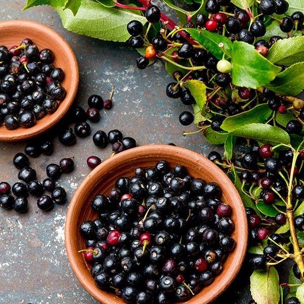 Maqui Berry Aristotelia Chilensis Fruit For Diabetics