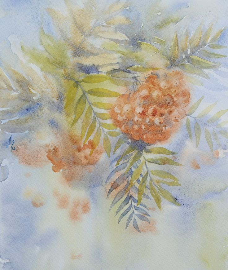 Рябина обыкновенная (Sorbus aucuparia). Shchepetnova Natalia.