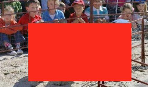 Lumba Haram Paling Haram Dalam Sejarah   Inilah Lumba Haram Paling Haram yang Pernah Diadakan | Acara sukan ternakan tahunan dan Rodeo bil sebagai yang terbesar di dunia dan festival kedua terbesar atau perayaan Amerika Utara. Selain acara Rodeo pro dan pameran ternakan perlumbaan babi turut dipaparkan.  Perlumbaan Babi adalah sukan di mana babi remaja berlumba di sekitar kotoran tertutup rumput palsu kecil atau trek batu. Perlumbaan ini biasanya semata-mata untuk hiburan dan pertaruhan…