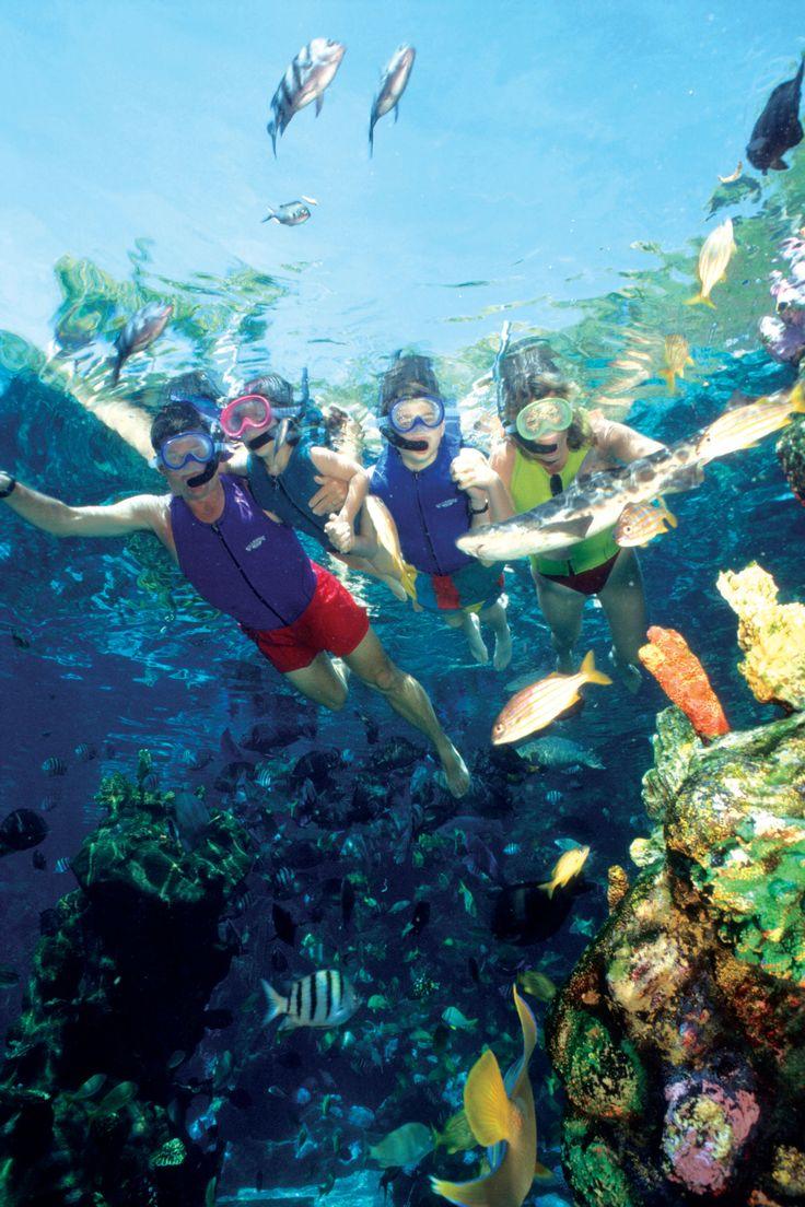 Shark Reef at Typhoon Lagoon