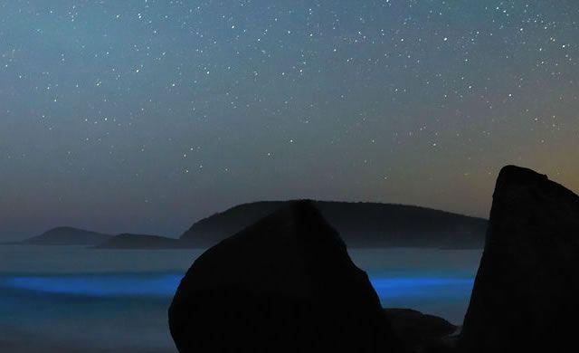 Spettacolo di luci naturali: Stelle e Bioluminescenza – Liquid Light Show