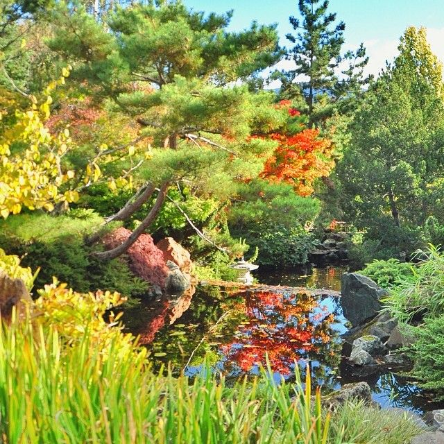 The Japanese garden in Hobart's Royal Botanical Gardens is open everyday and free to everyone. The gardens are stunning year round with cherry blossoms in spring, water lilies in summer, maples in autumn and conifers in winter. #botanicalgarden #tasmania #hobart #japanesegarden #discovertasmania Image Credit: jayedevil