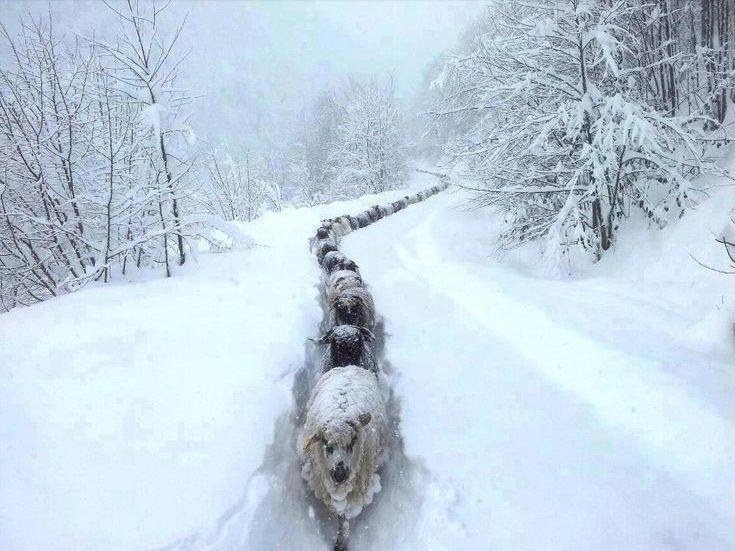 http://bluetravelstories.com/let-it-snow/