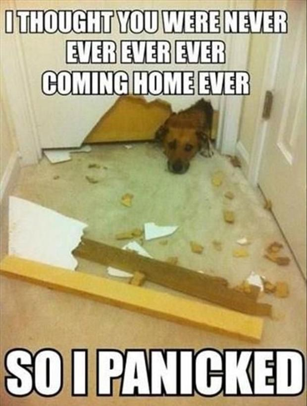 This makes me feel better about my pup :)