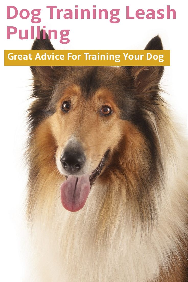 Learn About Dog Training Leash Pulling With This Article Check Out This Great Article In 2020 Dog Leash Training Dog Training Dog Training Tips