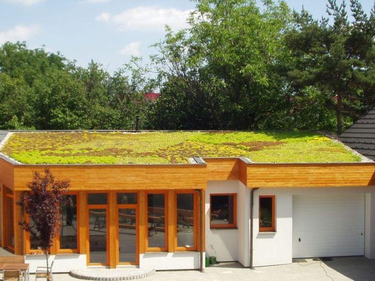 Ploché extenzivní střechy | Zelené střechy