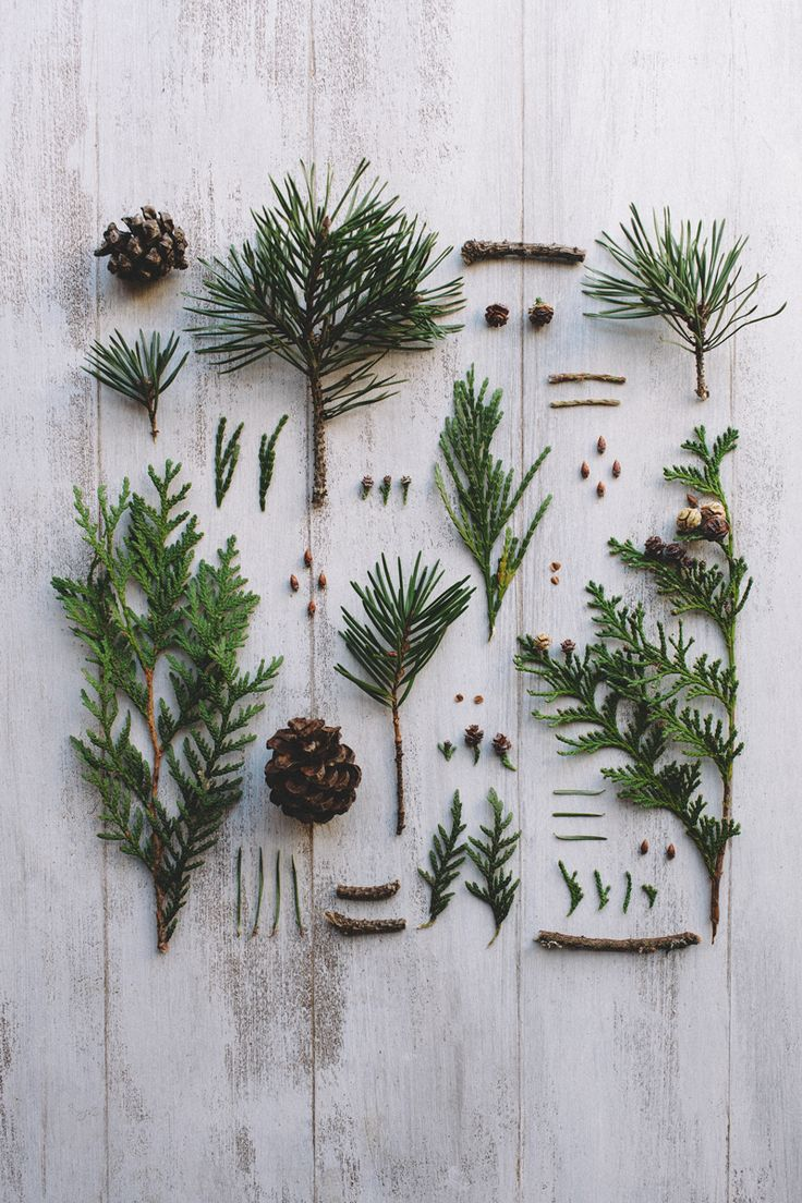 We love this Christmas foliage! Find some in our forests and make your own decorations this year!