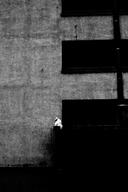 "POINT ""White cat cought on spying neighbours"" ~Tomasz Ćwiertnia Photography"