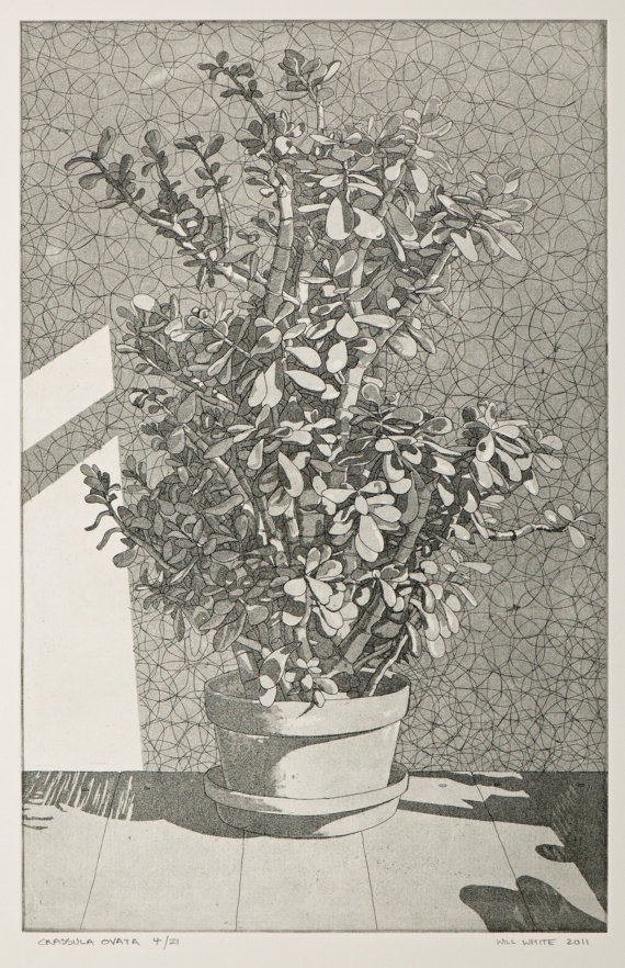 Crassula Ovata Money Plant Etching Print by williamwhiteart, $95.00