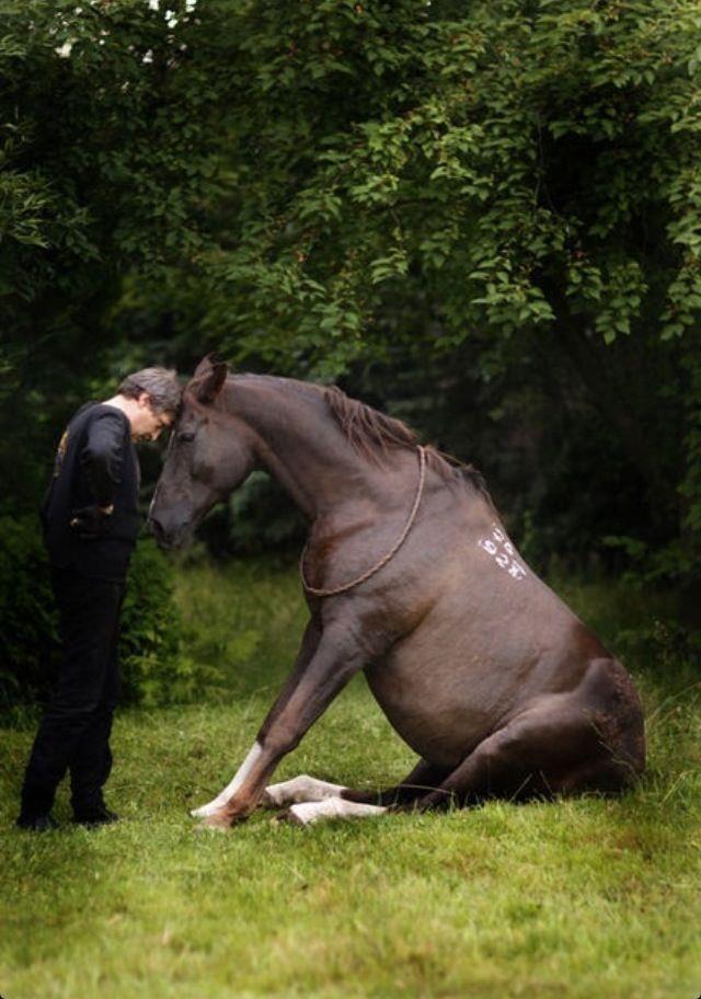 Horse sitting...