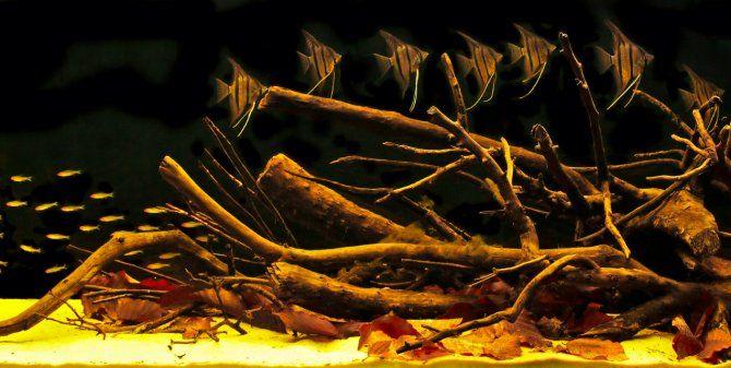 104 best images about amazon biotope aquarium on pinterest for Amazon fish tank
