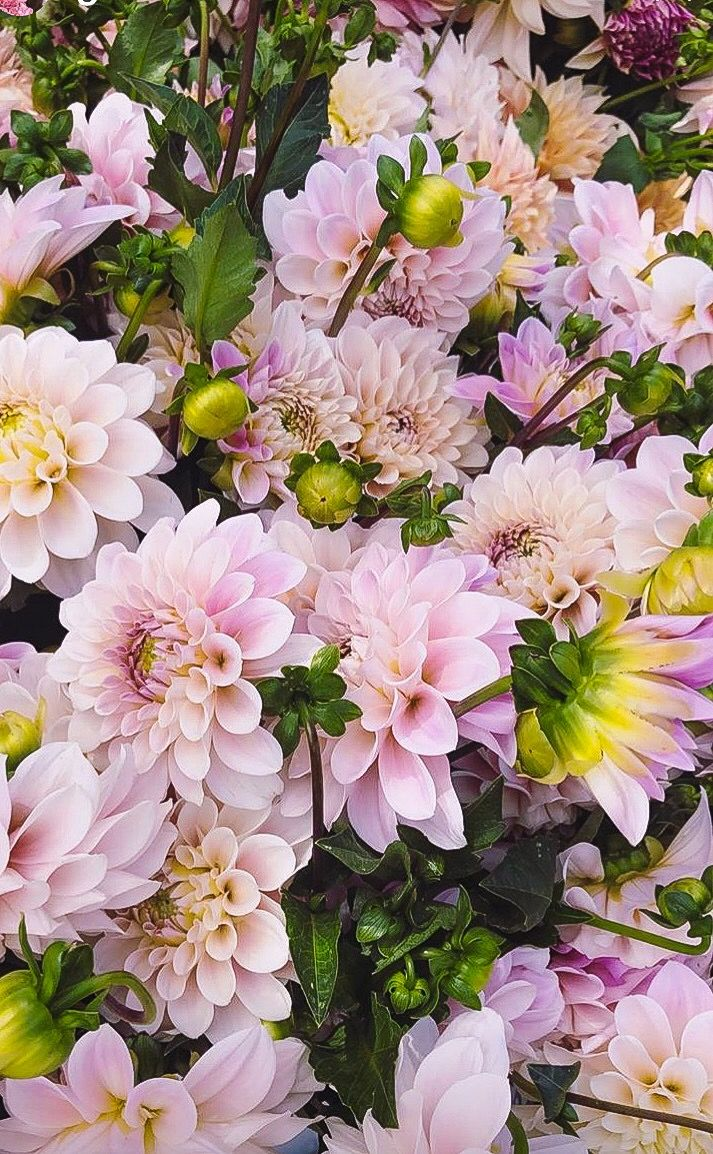 Garden trees names  Pin by Gail Rubke on The earth laughs in FLOWERS  Pinterest