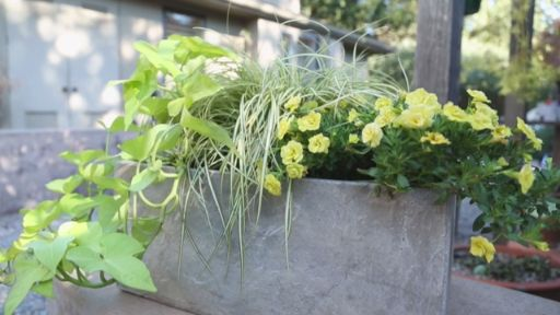 Plant a Lemon-Lime Garden