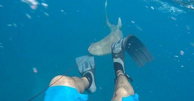 Τρομακτικό βίντεο: Καρχαρίας δαγκώνει ψαροντουφεκά στο πόδι