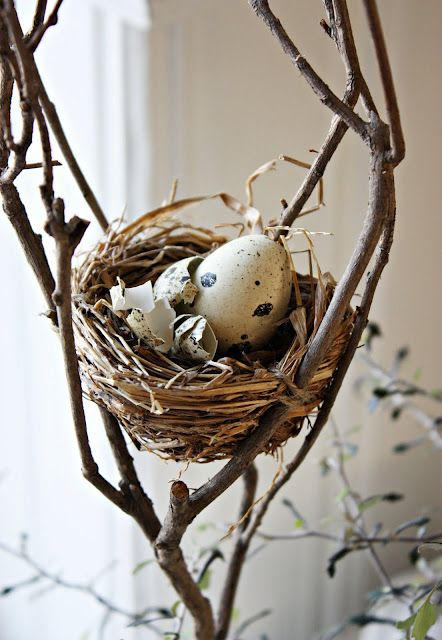 bird's nest with eggs for easter