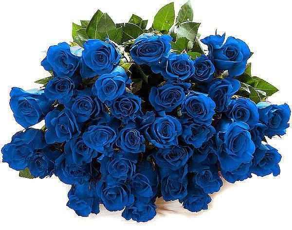 Букет роз синих картинки, скрапбукинг парню своими