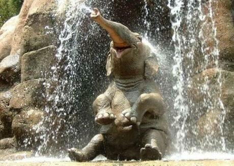 Cute little elephant :-)