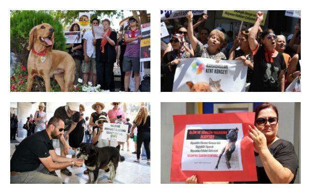 """Sendika (.) Org ///  Hayvan hakları savunucuları """"katliam yasası""""na karşı dört bir yanda eylemdeydi"""