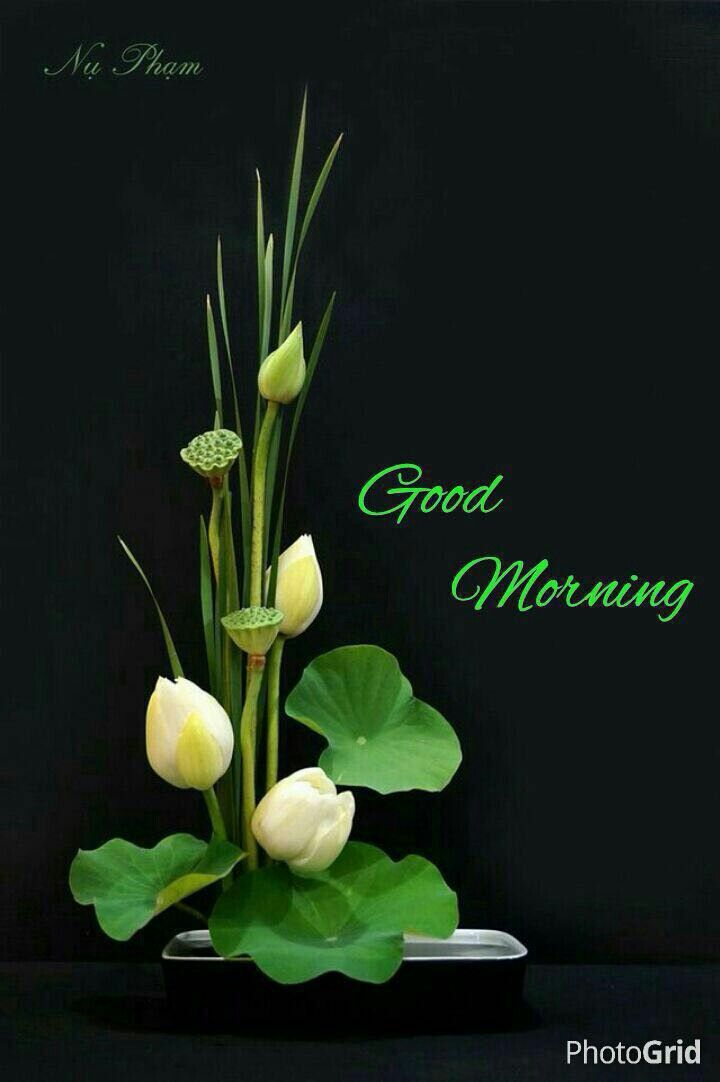 Best gd mrng ideas on pinterest wishes good