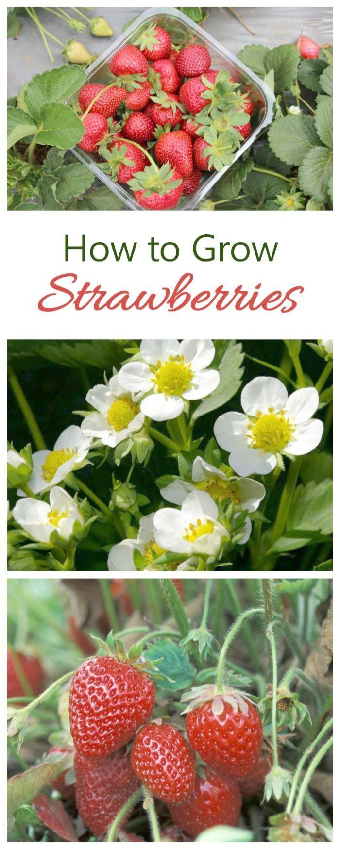 Easy Gardening Tips For Beginners Yet Gardening Ideas On Pinterest