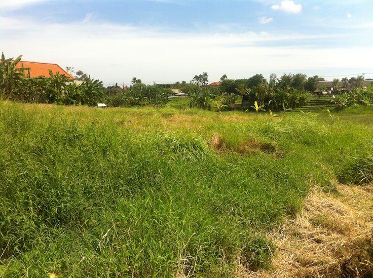 TANAH 1.5 ARE. KAYUTULANG CANGGU. BADUNG - Bali Best Property