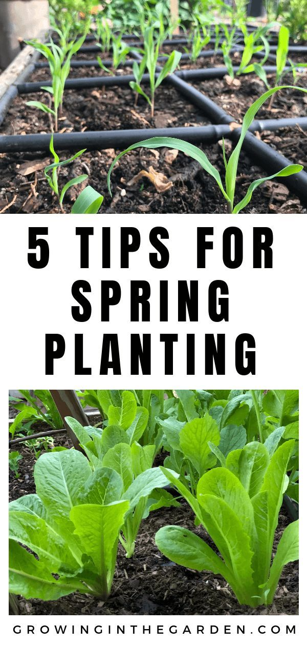 Tips For Spring Planting Spring Garden Checklist Vegetable