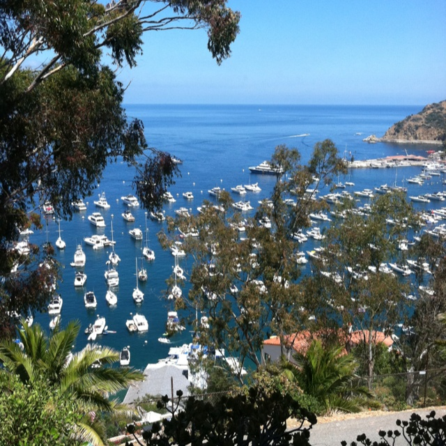 Catalina Island Beach: 17 Best Images About Santa Catalina Island On Pinterest