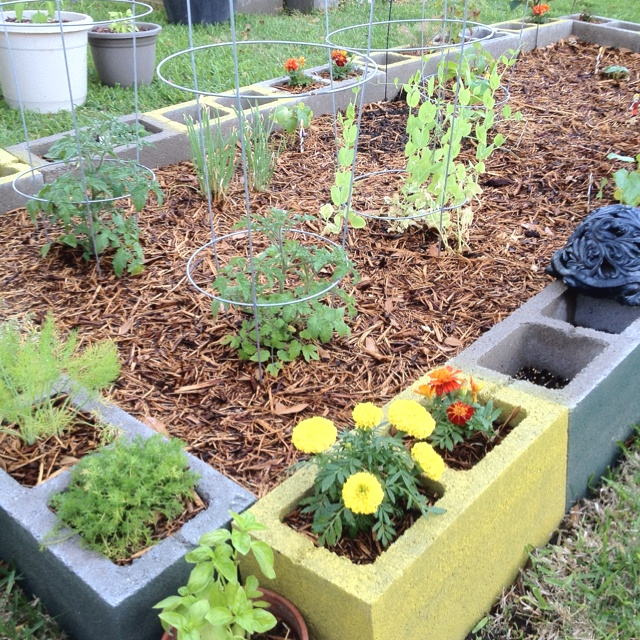 Raised bed/container garden