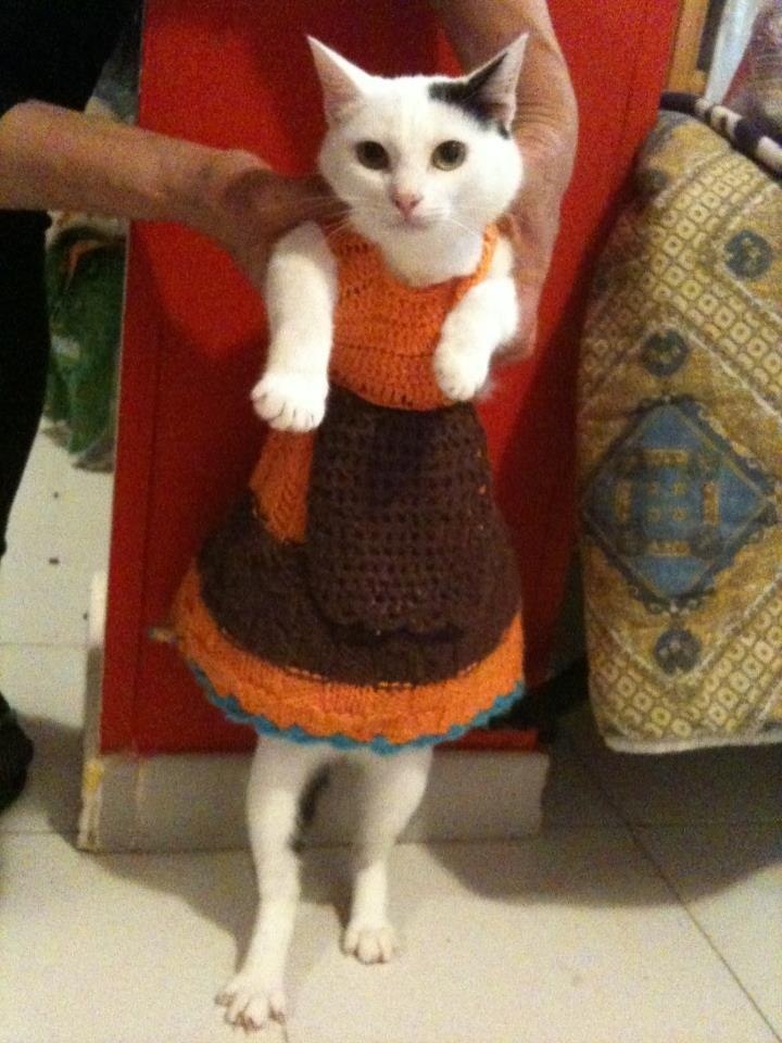 cats in clothes are so hilarious: