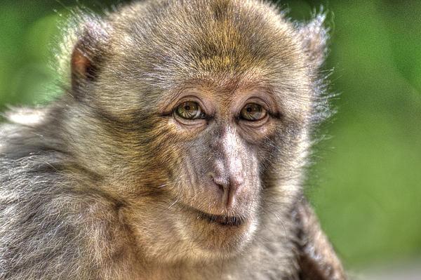 Monkey See