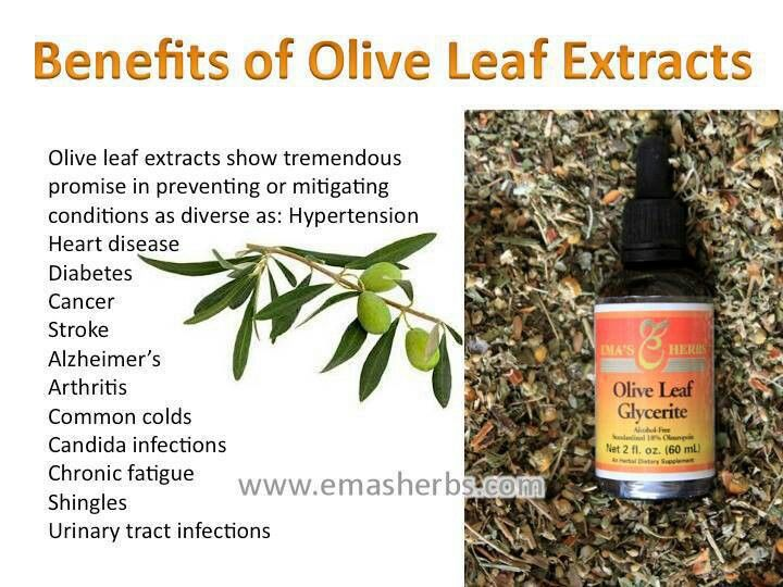 I find olive trees easy & delightful to grow in containers, and use their leaves in teas and smoothies. Or just buy olive leaf extract.