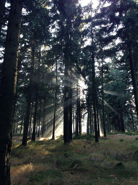 Histoire mystérieuse en forêt de Benon : une soirée pas comme les autres pour toute la famille