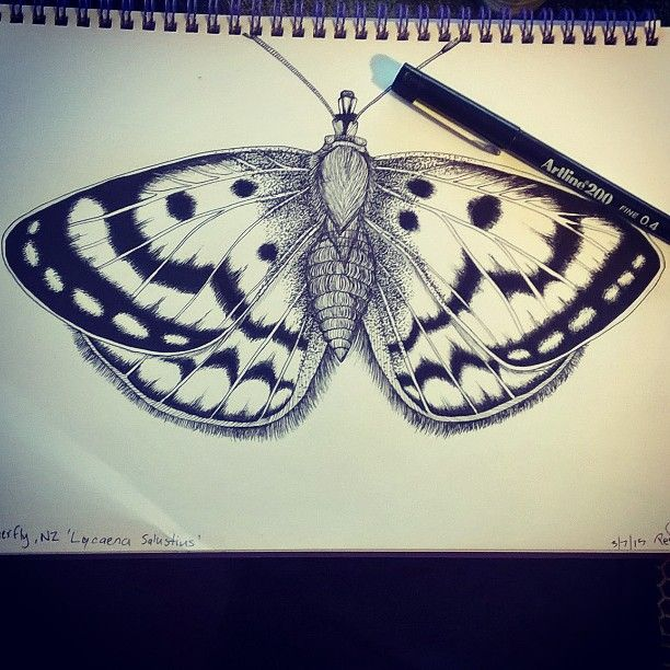 Butterfly drawings are fun, planning a fabric collection  #nznative #coastalcopper #pendrawing #sketch #blackandwhite #butterfly #artline200 #DontDoSymmetrical #BugsAreHairy #DestinedToBeFabric #smukdesign