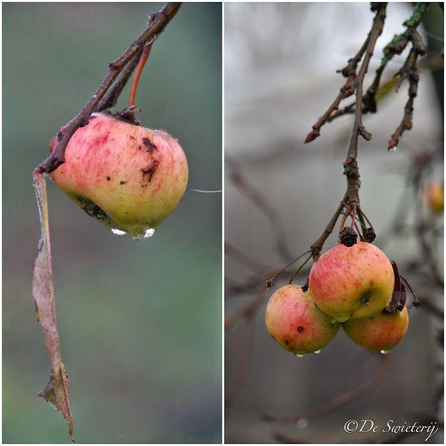 De Swieterij: the last apples of the year..