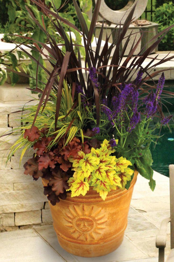 Container Garden Bronze New Zealand Flax Veronica