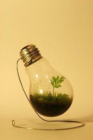 terrarium in a light bulb