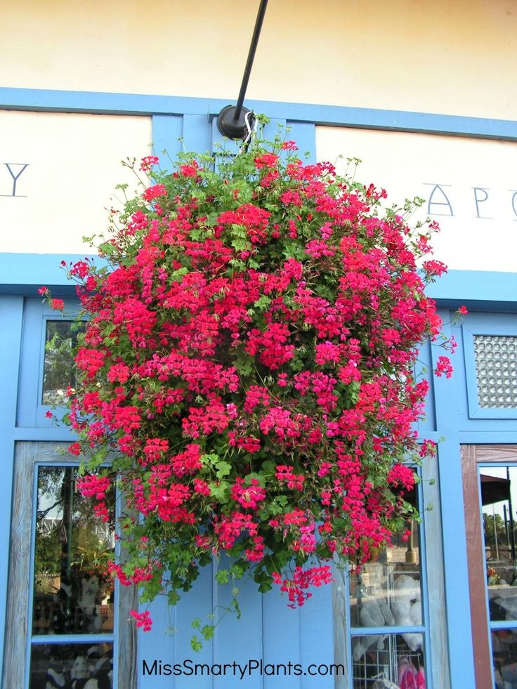 Hanging Flower Baskets Winter : Best images about outdoor planters pots on