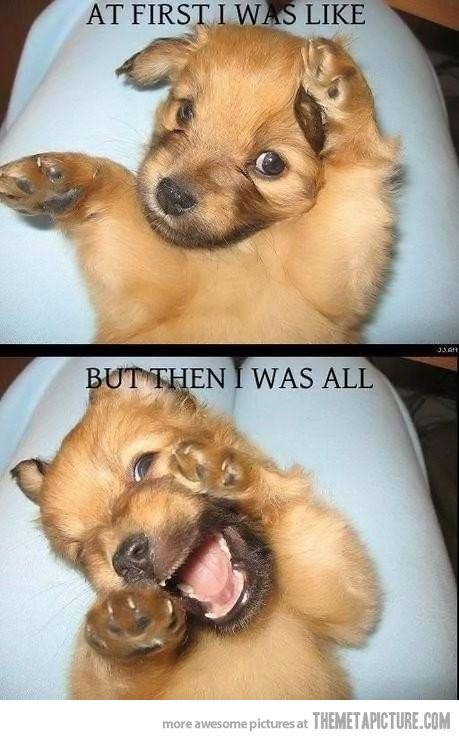 At first I was all like…Laugh, Dogs, Pets, Funny Stuff, Adorable, Things, Funny Animal, Funny Puppies, So Funny