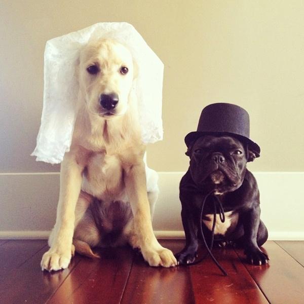 1000 id es sur le th me costume de mariage de chien sur pinterest costume de mariage mariage. Black Bedroom Furniture Sets. Home Design Ideas